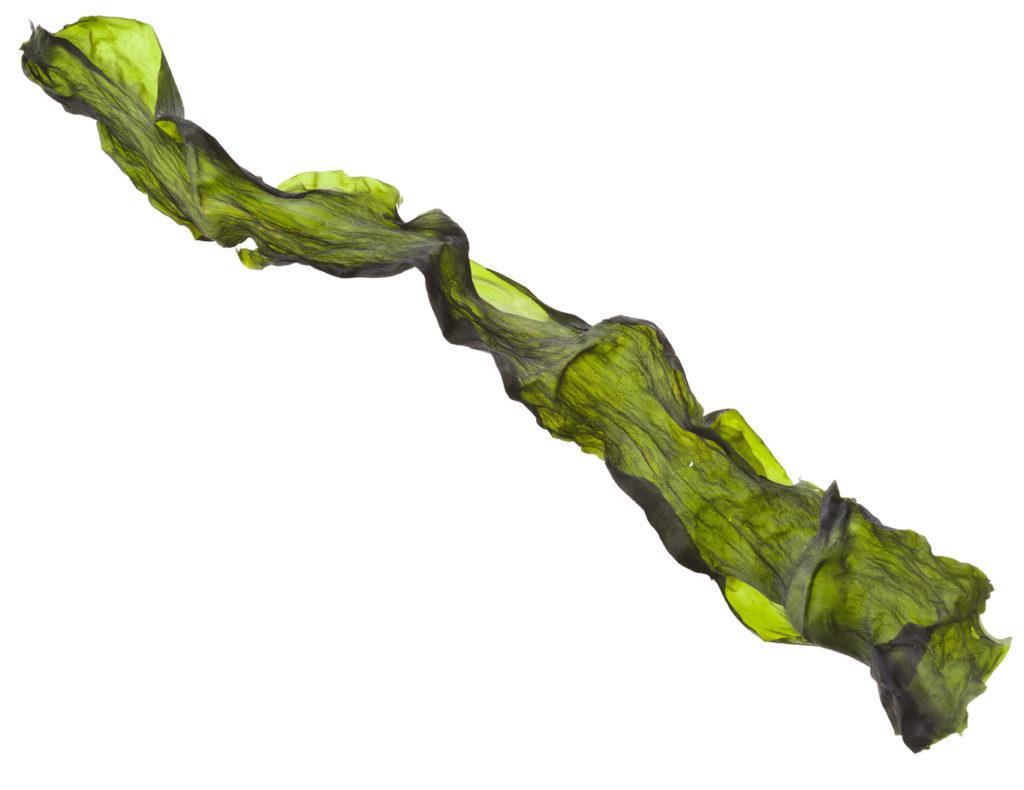 Dried Kelp Edible Seaweed