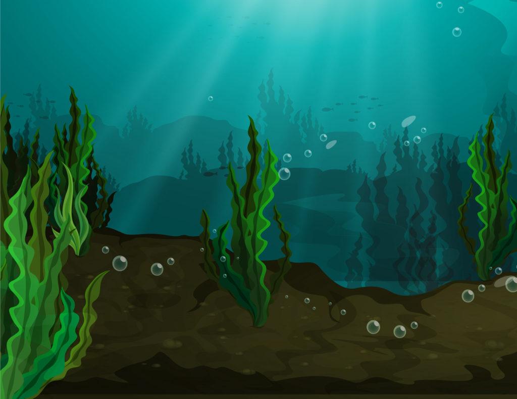 Seaweed Superfood Seaweed Nutrition Ocean Foods