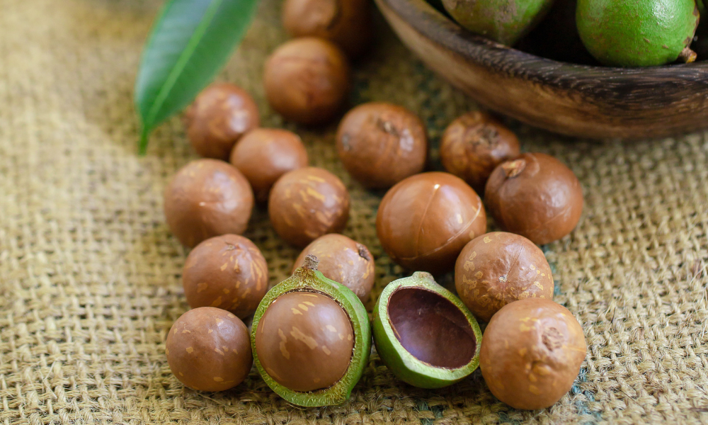 macadamia-nut-oil-health-benefits-skincare-healthcare